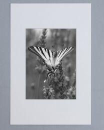 Passe-Partout 18x24 Blanc