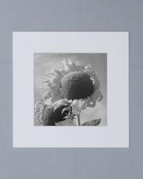 Passe-Partout 50x50 Blanc